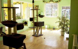 Das grüne Guppenzimmer im Katzenparadies-Hachmann