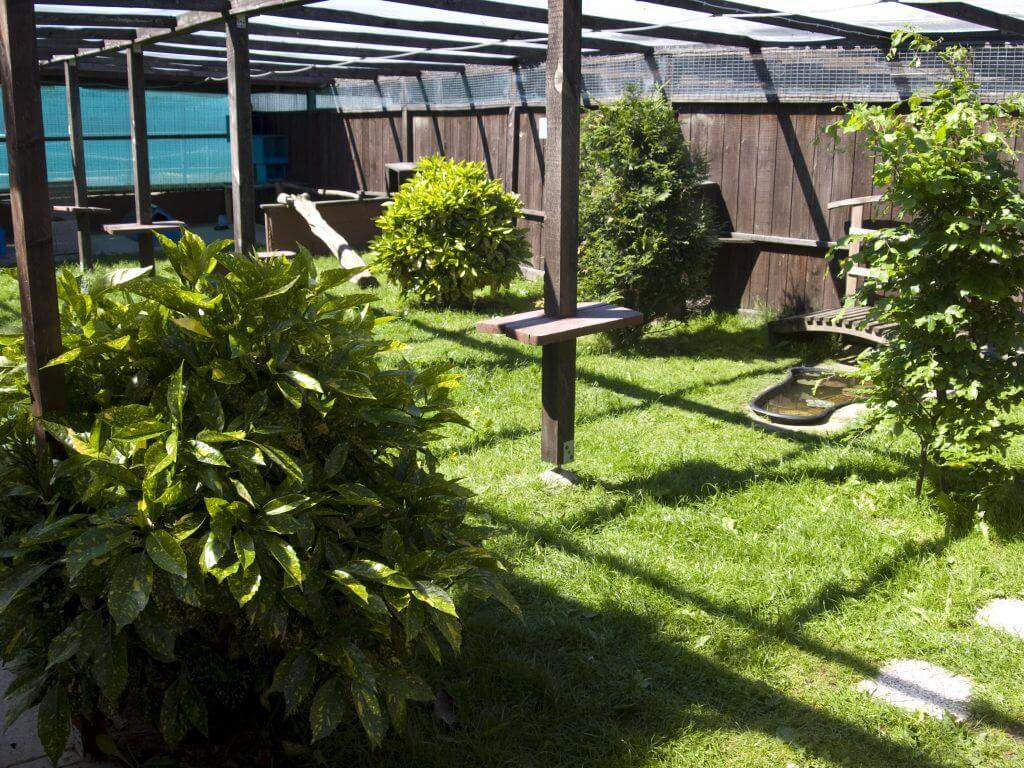 Foto eines der fünf Außenbereiche des Katzenhotel