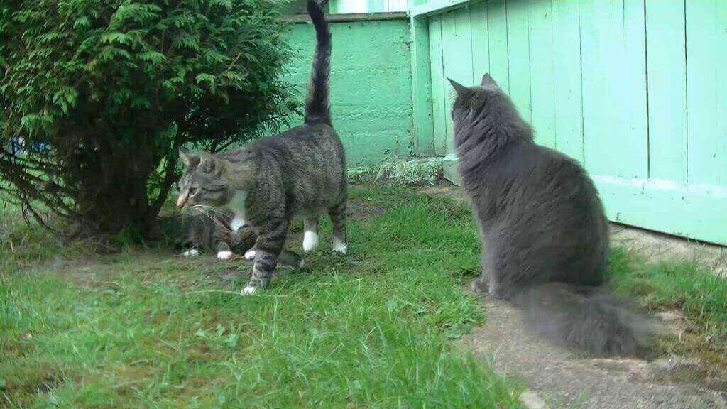 Foto von einer Katzengruppe im Katzenparadies-Hachmann