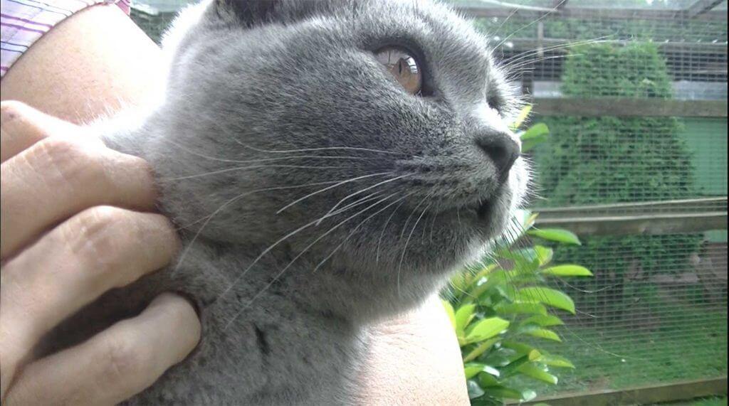 """Foto """"Schmusen und Kraulen lieben viele Katzen"""""""