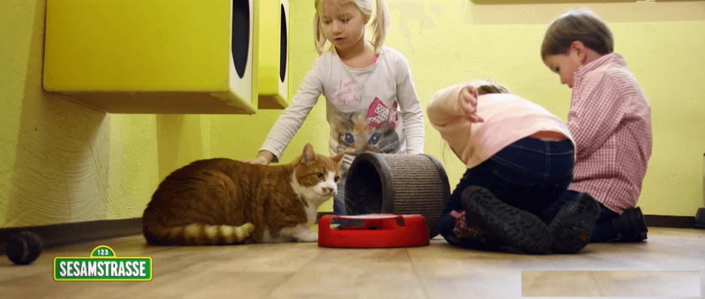 Sesamstraße im Katzenparadies